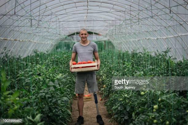 Disability guy on tomato farm
