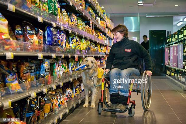 Disabled person in weelchair shopping with Labrador mobility assistance dog in supermarket Belgium