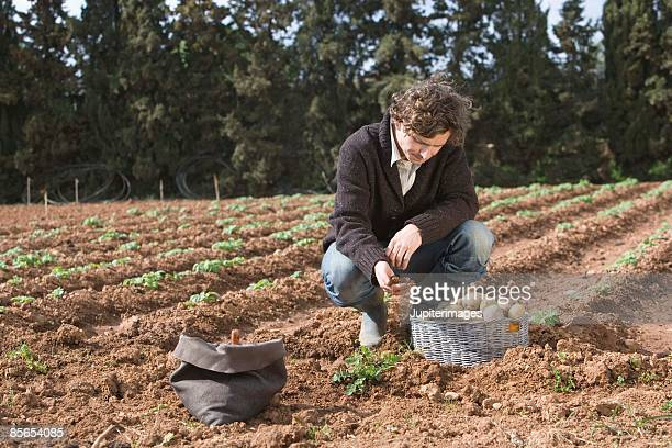 Disappointed man in field with potatoes