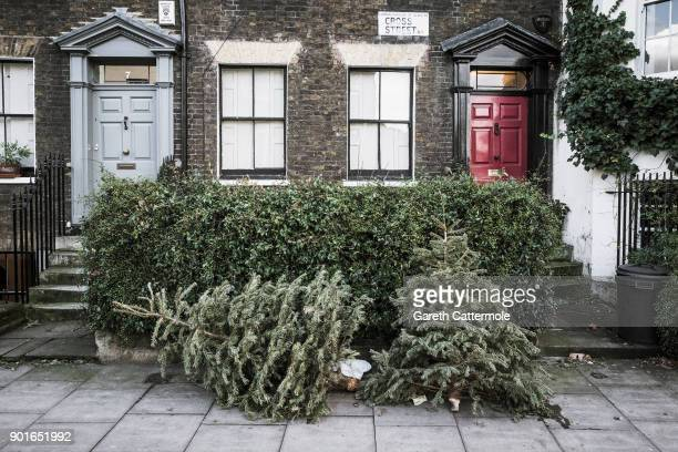 Discarded Christmas trees lie outside houses in Angel on January 5 2018 in London England In the lead up to Christmas a pine tree is the centre point...