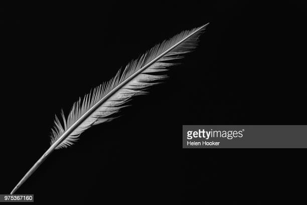 discarded - quill pen stock photos and pictures