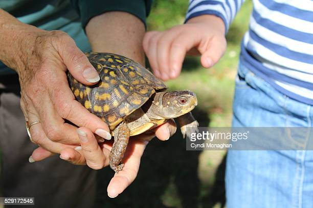 Discovering an Eastern Box Turtle