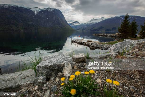 Discovering Norway: Nature, water, rocks, snowcapped mountains, fjords and yellow flowers