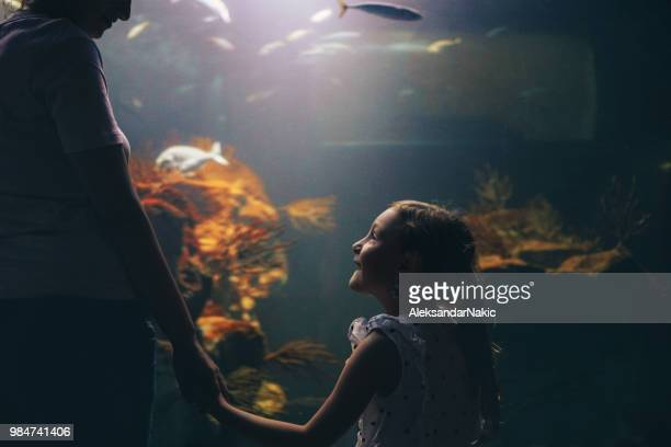 discovering underwater world with my mom - museum stock pictures, royalty-free photos & images