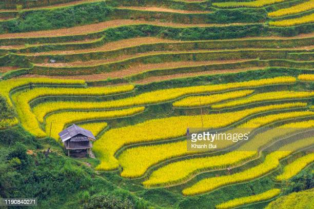 discovery and travel at rice terraces heritage in lao cai province, vietnam - prosperity stock pictures, royalty-free photos & images
