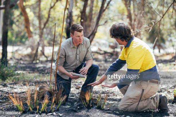 discussion over tree grass - bushfire australia stock pictures, royalty-free photos & images