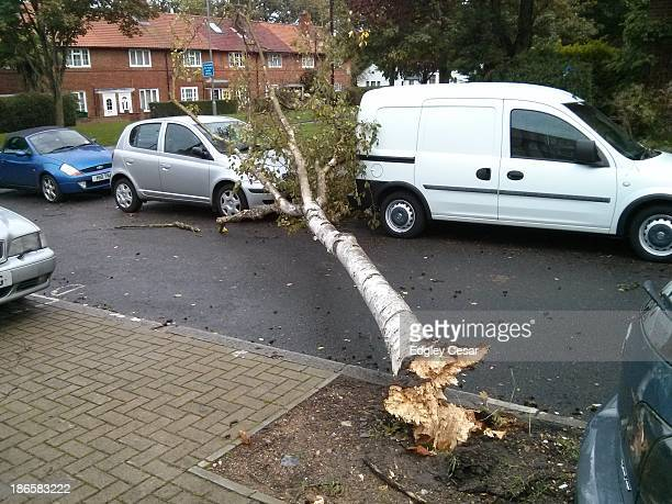 Diseased small birch fell this morning blocking Sunnymead Road in Putney, SW London.