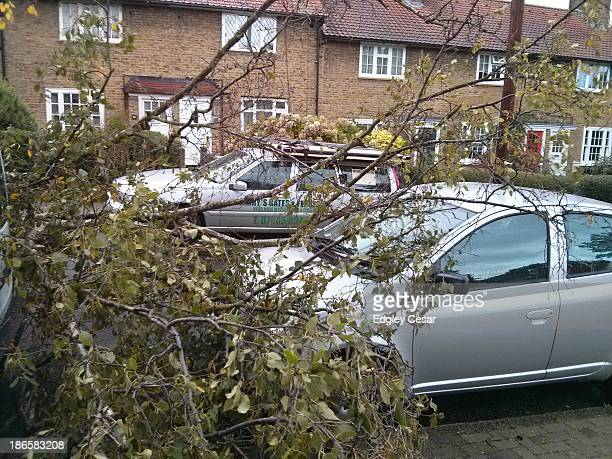 Diseased small birch fell this morning due to strong winds, blocking Sunnymead Road . Minor damage to a parked vehicle.