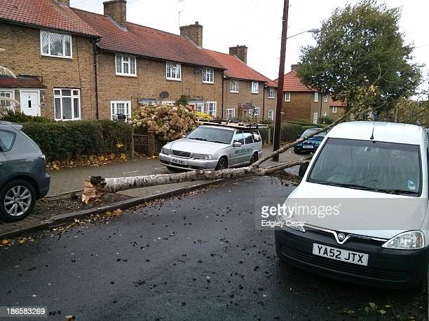 Diseased small birch fell this morning due to strong winds, blocking Sunnymead Road . A little damage to a parked car.