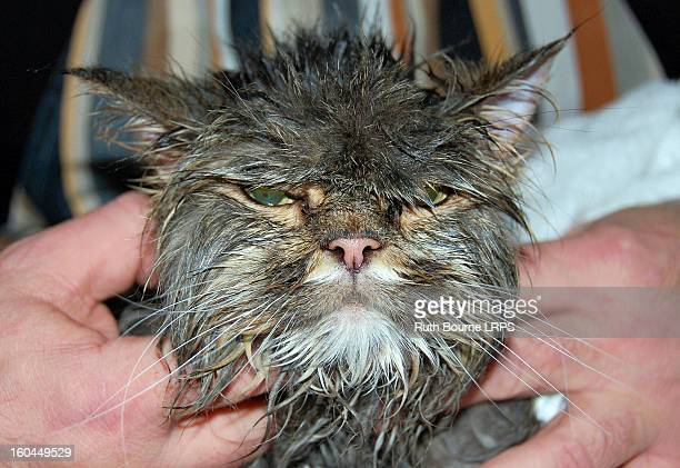Disgruntled, wet, Raggedy Cat