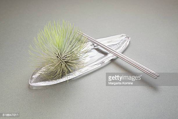 A dish of air plant