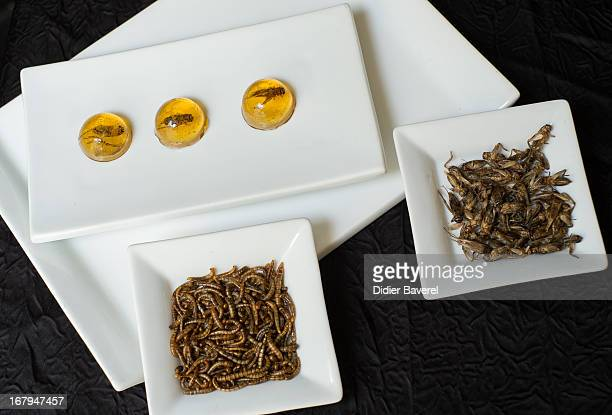 Dishes of worms and crickets are displayed in front of 'Inclusion de grillons en bubble au Whisky' 'Crickets caught in a whisky jelly bubble' in the...