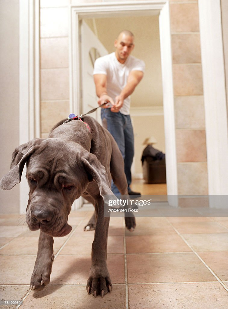 Disobedient dog tugging on leash with master : Stock Photo