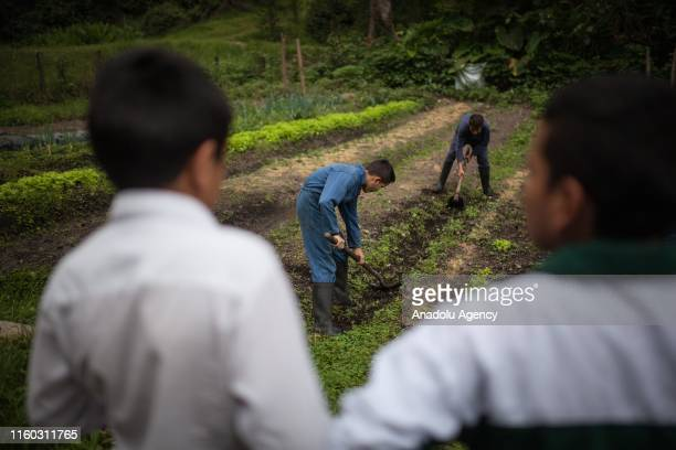 Displaced children due to the conflict in Colombia have education on a coffee farm in Tena, Cundinamarca, Colombia on August 04, 2019. The displaced...