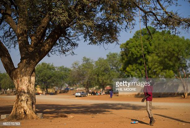 A displaced South Sudanese boy uses a stick to pick mangoes from a tree in the grounds of St Theresa's cathedral in Juba on January 13 2014 where he...