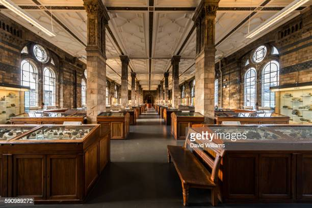 display halls at the natural history museum in south kensington, london, a world famous museum exhibiting a vast range of specimens covering botany, entomology, minerology, palaeontology and zoology. - ロンドン自然史博物館 ストックフォトと画像