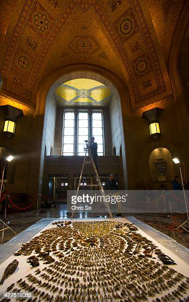 A display of 1700 dead migratory birds including birds at risk is being photographed at the old entrance to the ROM by Kenneth Herdy for FLAP Canada...