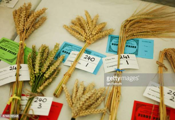 Display of corn heads is shown during an event at the Osmotherley Country Show on August 5, 2017 in Osmotherley, England. The annual show hosts pony,...