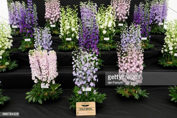 A display of Delphinium are shown during the 160th Great Yorkshire Show on July 10 2018 in Harrogate England First held in 1838 the show brings...