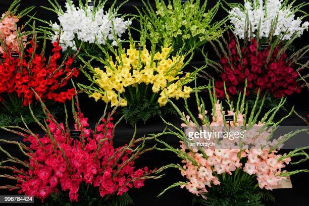 A display of Gladioli are shown during the 160th Great Yorkshire Show on July 10 2018 in Harrogate England First held in 1838 the show brings...