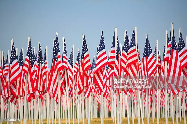 a display of many flags of the united states of america - flagpole stock pictures, royalty-free photos & images