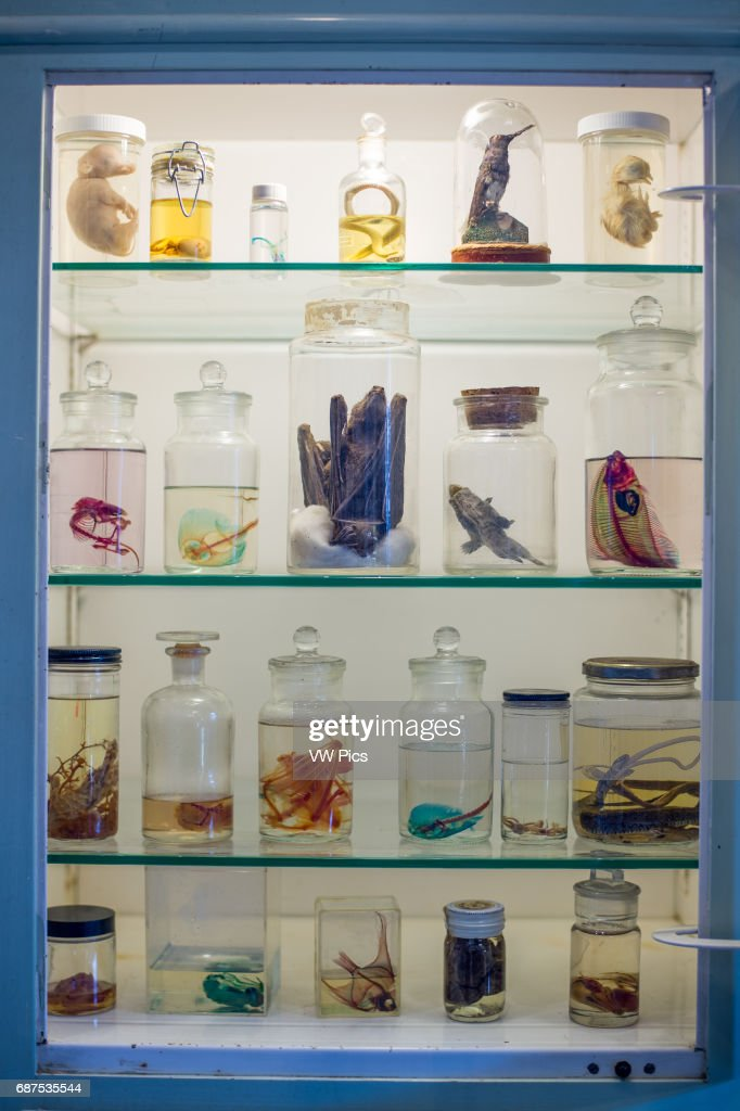Display of odd specimens in glass bottles at the Morbid Anatomy ...