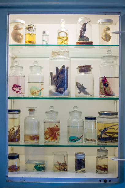 Display of odd specimens in glass bottles at the Morbid Anatomy ...