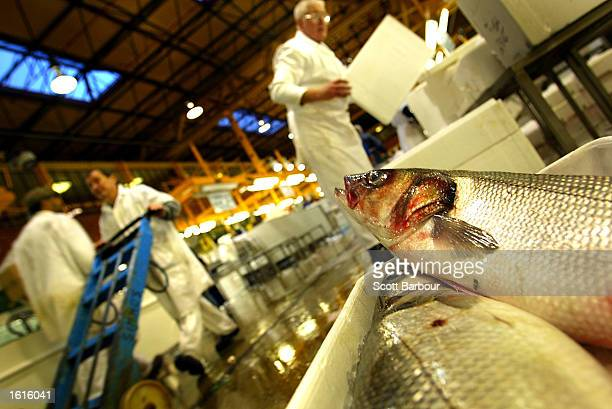 A display of Seabass are shown for sale at Billingsgate Fish Market November 12 2002 in London England An International Council for the Exploration...