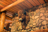 stuffed animal hanging wall buffalo head