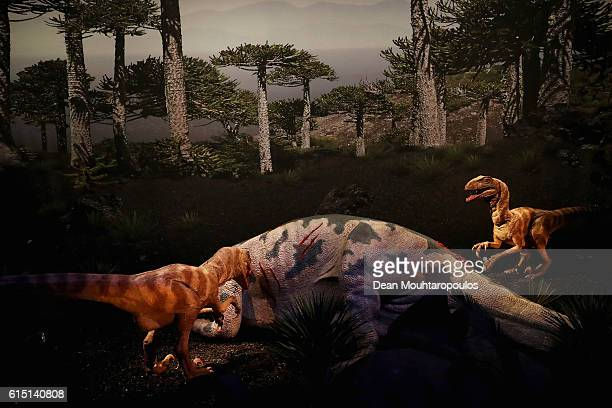 A display of the Maiasaura and Dromaeosaurus albertensis a theropod are dinosaurs which lived during the Late Cretaceous period and are pictured...