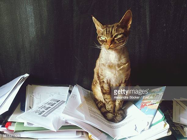 Displeased Devon Rex Cat Sitting On Pile Of Papers Against Wall