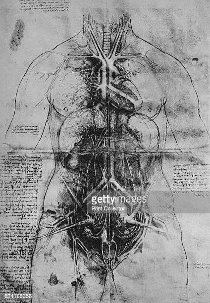 Dissection of the Principal Organs of a Woman' c1480 From The Drawings of Leonardo da Vinci [Reynal Hitchcock New York 1945] Artist Leonardo da Vinci