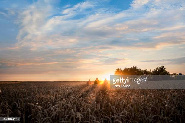 distant caucasian men in field of wheat at sunset - illinois photos et images de collection