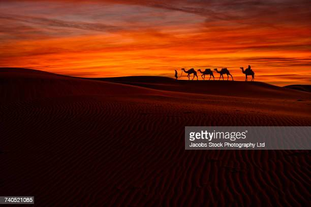 distant people and camels on sand dunes in desert - camel train stock pictures, royalty-free photos & images