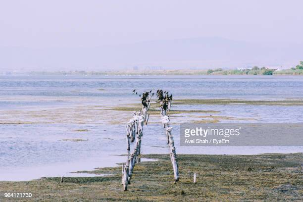 Distant View Of Birds Perching On Wooden Posts In Lake