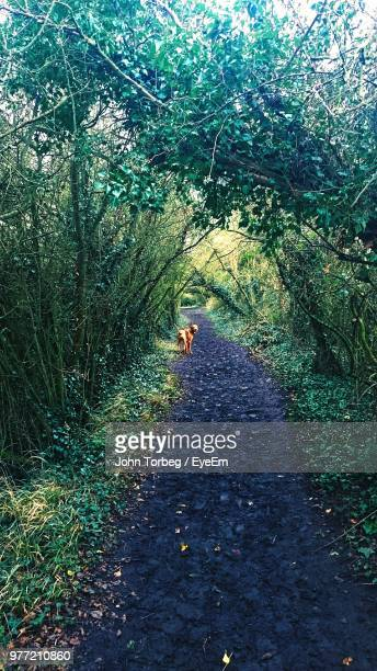 distant view of dog on footpath in forest - aylesbury stock photos and pictures