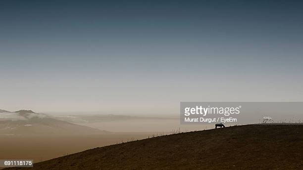 Distant View Of Horses Grazing On Hill Against Clear Sky