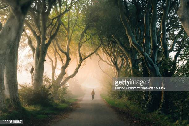 distant view of man walking along treelined road, dark hedges, stranocum, northern ireland, uk - images stock pictures, royalty-free photos & images