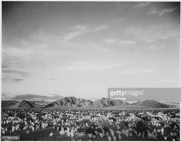 Distant view of mountains with desert shrubs highlighted in foreground near Death Valley National Monument California 1942