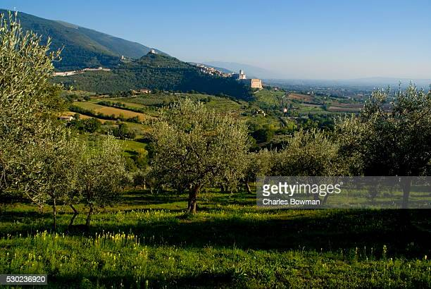distant view of the church of san francesco, assisi, umbria, italy, europe - olive orchard stock photos and pictures