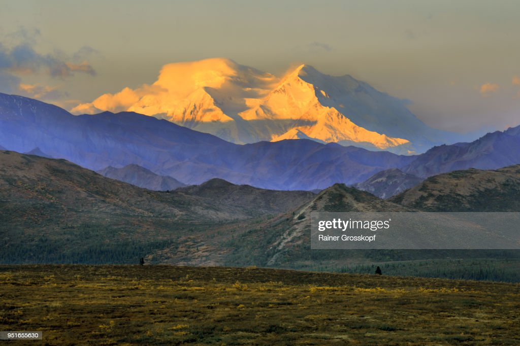 Distant view of the majestic Mount Denali at sunrise : Stock-Foto