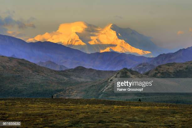distant view of the majestic mount denali at sunrise - rainer grosskopf fotografías e imágenes de stock
