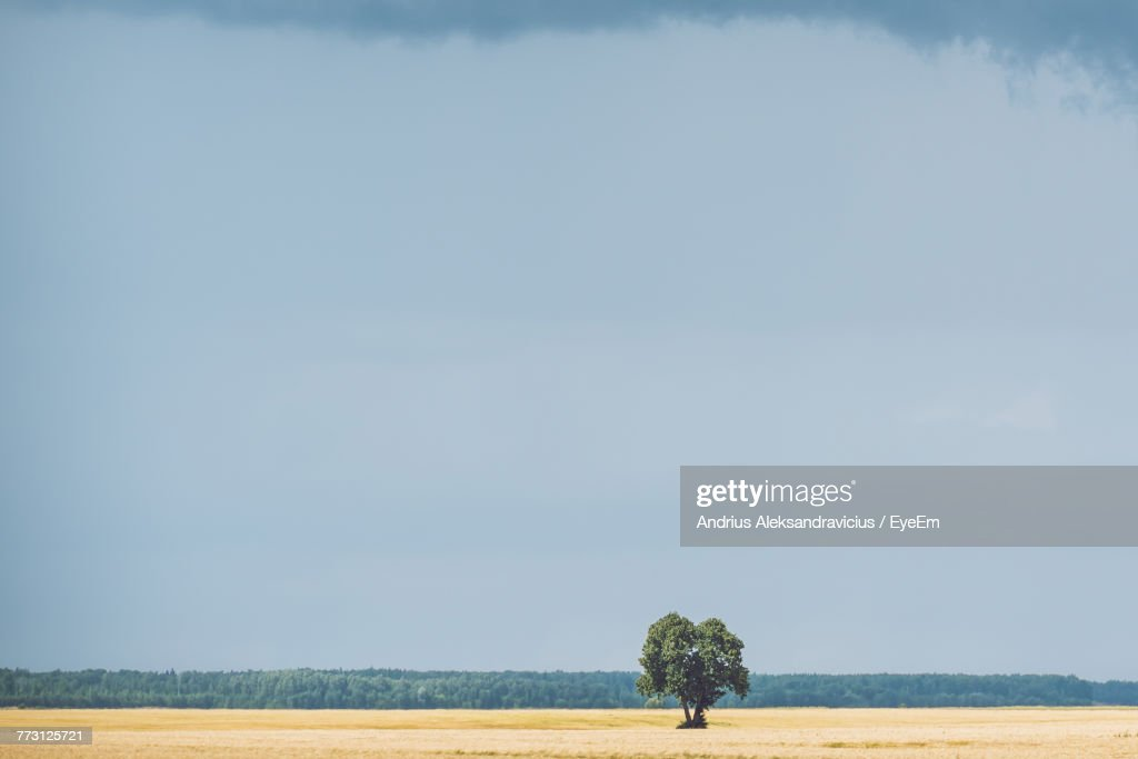 Distant View Of Tree On Field Against Sky : Photo