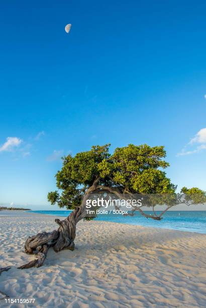 dive tree sunrise - oranjestad stockfoto's en -beelden