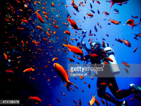 Dive with the fishes