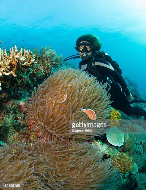 Diver and anemone.