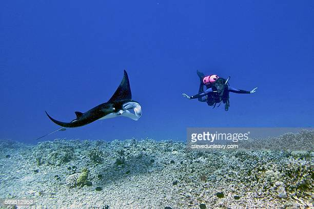 Diver and Manta Ray, Hawaii