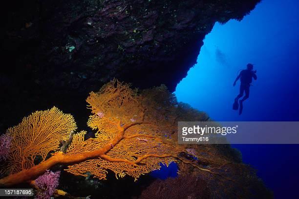 ダイバーとオレンジ海のファン