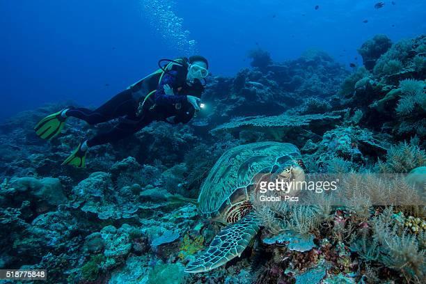 Diver and Turtle - Palau, Micronesia