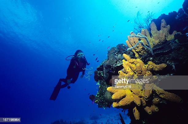 Diver and Yellow Sponge